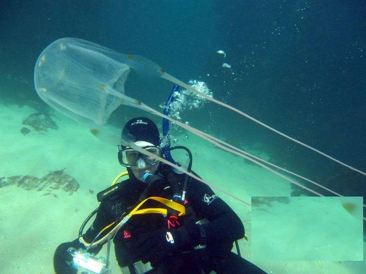 Самые опасные медузы в мире - кубомедузы